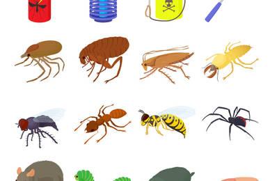 Nos conseils droguerie pour se débarrasser des insectes